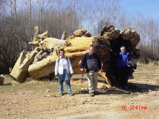 12-03-2005 San Martín del Río (los troncos centenarios)