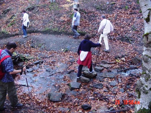 28-10-2006 hayedo de la Tejera Negra